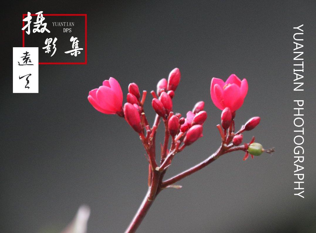 远天摄影集 深圳摄影画册
